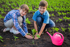 Smiling kids care the sprouts on field Royalty Free Stock Images