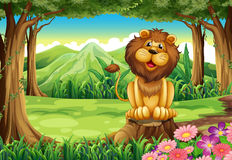 A smiling king lion above the stump Royalty Free Stock Photo
