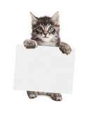 Smiling Kitten Holding Blank Sign Royalty Free Stock Photos