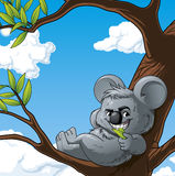 Smiling koala leaning of a tree and eating. Illustration of a smiling koala leaning of a tree and eating Royalty Free Stock Photos