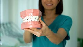 Smiling lady dentist holding jaw model, professional services, healthy teeth. Stock photo stock photo