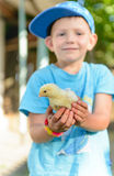 Smiling little boy holding a young chick Royalty Free Stock Photos