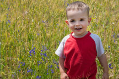 Smiling little boy in the sunny meadow Stock Images