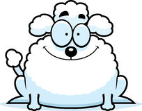 Smiling Little Poodle Stock Images