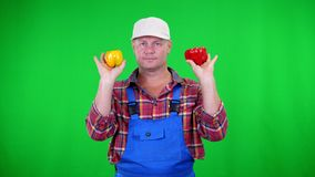 Smiling male farmer in plaid shirt and hat holds sweet peppers, waving pepper, like maracas, on Chromakey, green stock video