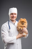 Smiling male vet with phonendoscope holding cute pomeranian dog Stock Photography