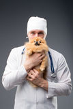 Smiling male vet with phonendoscope holding cute pomeranian dog Stock Image