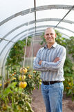 Smiling man in the hothouse. Smiling man with tomatos plant in the hothouse stock images