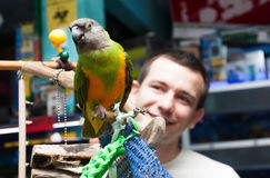 Smiling man looks at Senegal parrot in a pet shop Royalty Free Stock Photos