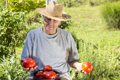 Smiling man showing organic tomato Stock Image