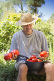 Smiling man showing organic tomato Royalty Free Stock Images