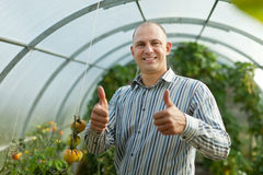 Smiling man in tomatos plant Royalty Free Stock Images