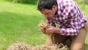 Smiling man touching and smelling straw Stock Photo