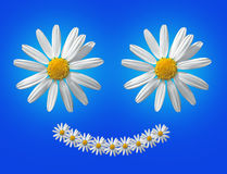 Smiling marguerite Royalty Free Stock Photos