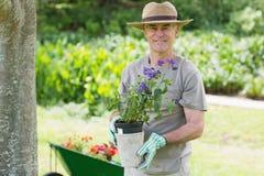 Smiling mature man engaged in gardening Royalty Free Stock Image