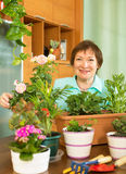 Smiling mature woman working with flowers Stock Images