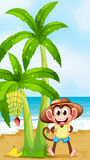 A smiling monkey at the beach with bananas Royalty Free Stock Photo