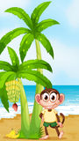 A smiling monkey at the beach near banana plant Stock Photo