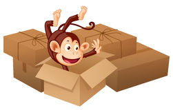 A smiling monkey and boxes Royalty Free Stock Images