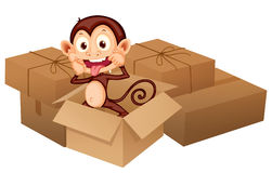 A smiling monkey and boxes Royalty Free Stock Image