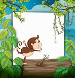 A smiling monkey and a white board Stock Photo