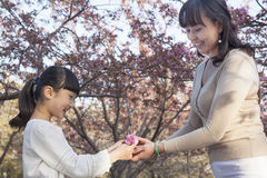 Smiling mother giving her daughter a cherry blossom outside in the park in the springtime, Beijing Stock Images