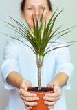 Smiling office worker girl holding a potted plant Royalty Free Stock Photography