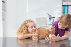 Smiling owners petting their cat Stock Photo