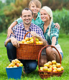 Smiling parents and teenager holding  apples. Smiling parents and teenager  holding basket with apples outdoors Stock Photos