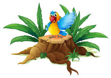 A smiling parrot on a stump Royalty Free Stock Image