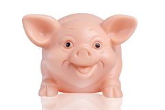 Smiling Pig Stock Images
