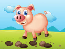 A smiling pig near the stones Royalty Free Stock Photos