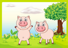 Smiling pigs. Illustration of smiling pigs in a beautiful nature Stock Photo