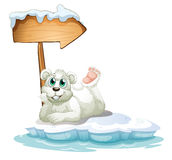 A smiling polar bear under the wooden arrow Royalty Free Stock Photos