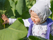 Smiling pretty little child girl in leaves. Of burdock in park Stock Images