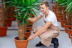 Smiling professional florist fixing flowerpots Royalty Free Stock Images