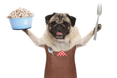 Smiling pug dog wearing leather barbecue apron, holding up blue food bowl. With kibble and fork, isolated on white background Stock Photo