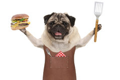 Smiling pug dog wearing leather barbecue apron, holding up hamburger and spatula. Isolated on white background Stock Photo