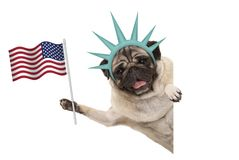 Smiling pug puppy dog holding up American flag, sideways from white banner, wearing lady Liberty crown. Isolated Royalty Free Stock Photo