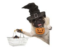 Smiling pug puppy dog holding up metal grocery basket, wearing witch hat and carved pumpkin lantern stock photos