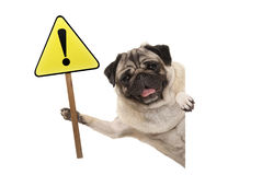 Smiling pug puppy dog holding up yellow warning, attention sign with exclamation mark Royalty Free Stock Photo