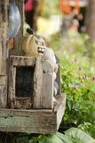 Smiling pumkin Helloween. In small wooden house Stock Photo