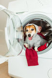 Smiling pup inside washing machine. Laundry and dry cleaning pet service. Funny ad for your business Stock Photos