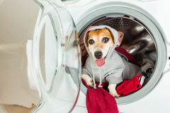 Smiling pup inside washing machine. Laundry and dry cleaning pet service. Funny ad for your business Royalty Free Stock Photo