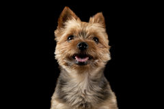 Smiling puppy Stock Photography