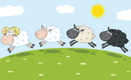 Smiling Ram Sheep Leading Three Sheep Royalty Free Stock Images