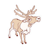Smiling reindeer looking at you Royalty Free Stock Photo