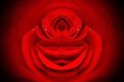 Smiling rose Stock Image