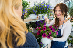 Smiling Salesgirl Showing Flower Plant To Customer Royalty Free Stock Images