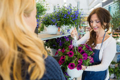 Smiling Salesgirl Showing Purple Flower Plant To Stock Image